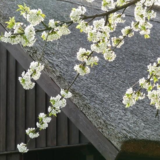 Ferienhaus »Bienenhaus« - Im Frühling